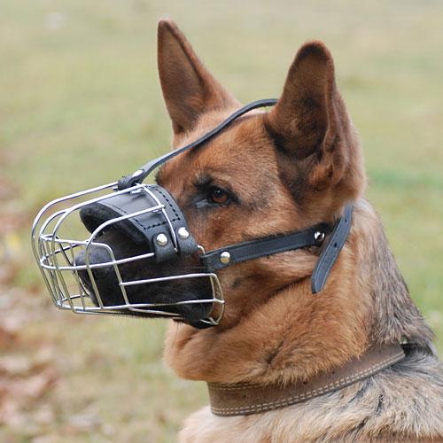 Одел бы намордник- остался бы живой:Саратовца убили из-за отсутствия намордника у его собаки.